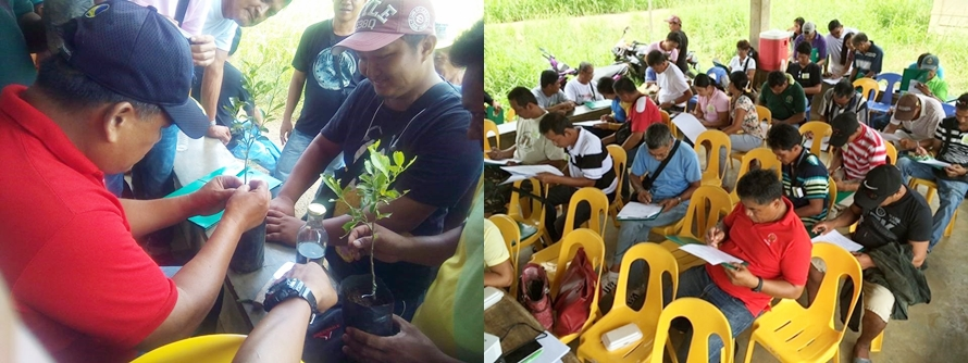 Farmers participating in the Calamansi Production Training Series